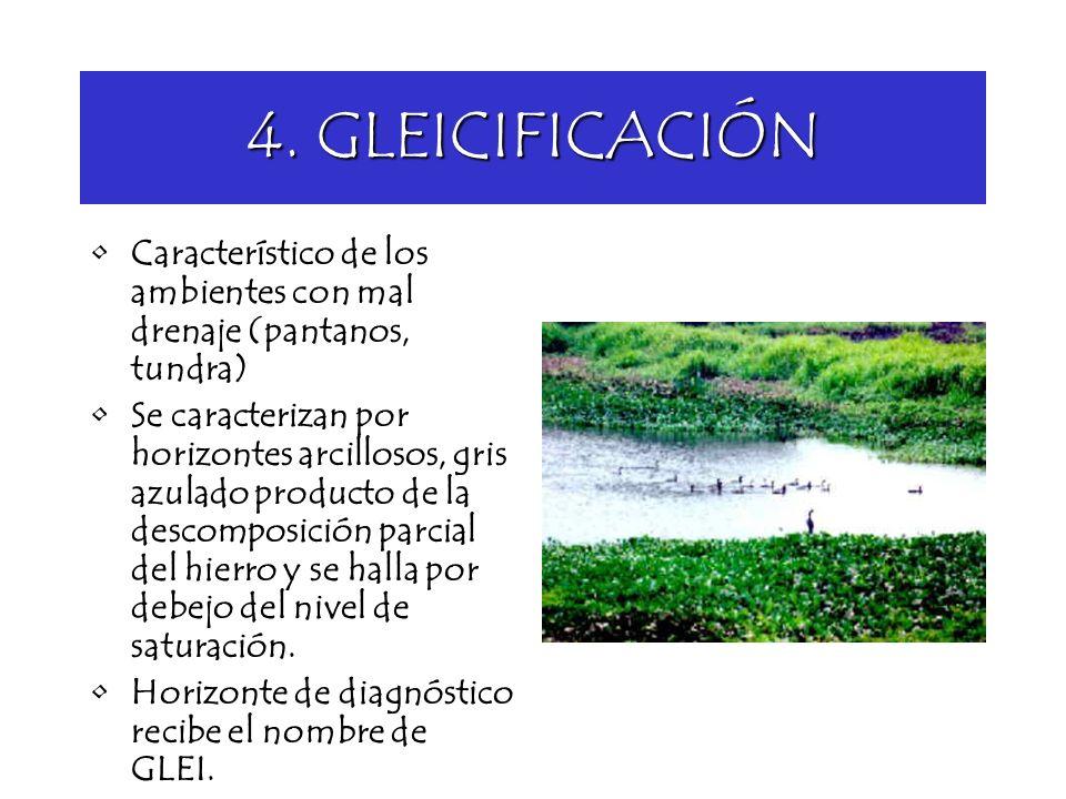 4. GLEICIFICACIÓN Característico de los ambientes con mal drenaje (pantanos, tundra) Se caracterizan por horizontes arcillosos, gris azulado producto