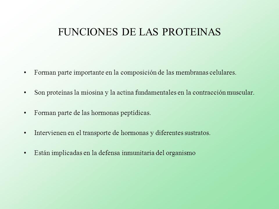 FUNCIONES DE LAS PROTEINAS Forman parte importante en la composición de las membranas celulares. Son proteínas la miosina y la actina fundamentales en