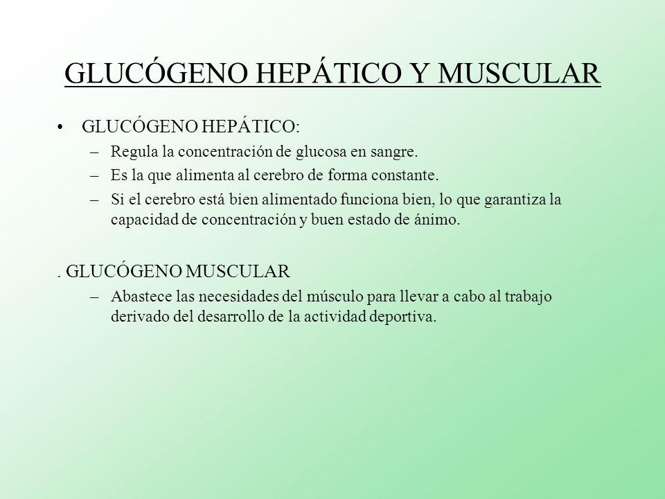 GLUCÓGENO HEPÁTICO Y MUSCULAR GLUCÓGENO HEPÁTICO: –Regula la concentración de glucosa en sangre. –Es la que alimenta al cerebro de forma constante. –S