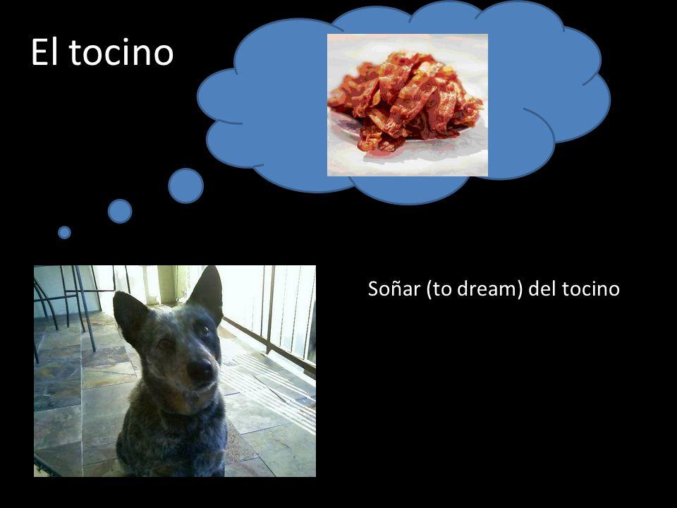El tocino Soñar (to dream) del tocino