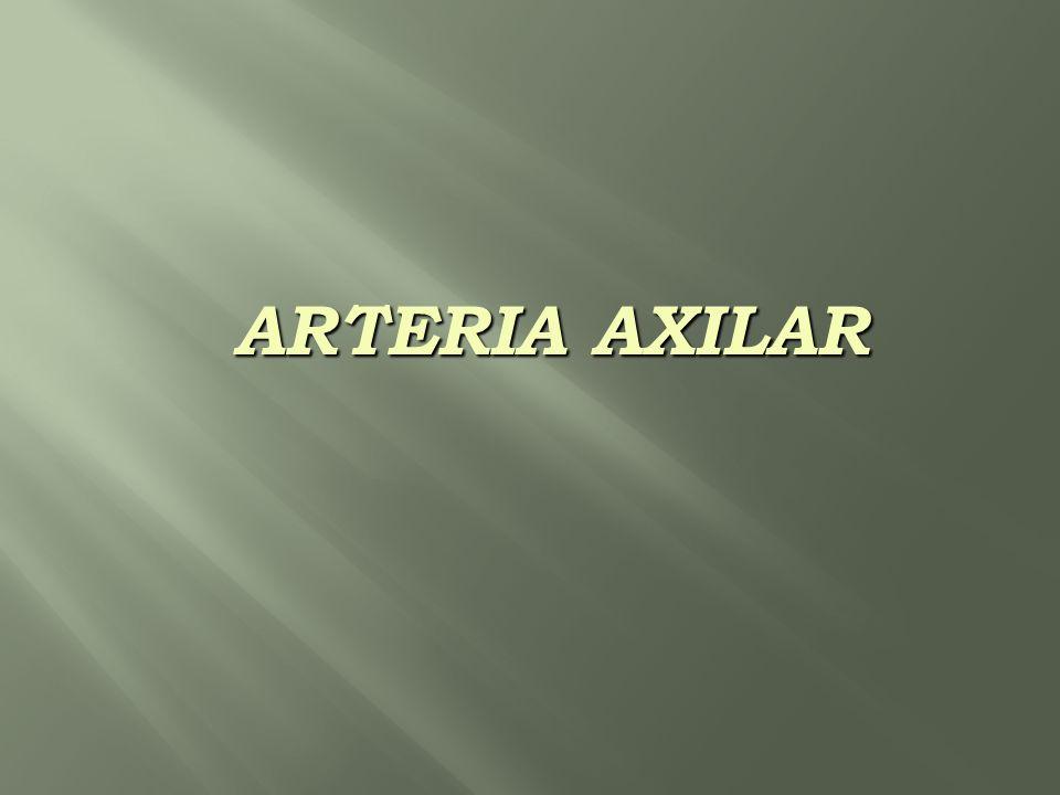 ARTERIA AXILAR