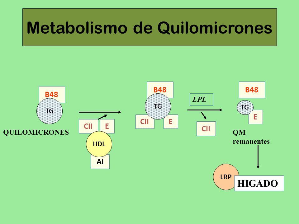 Metabolismo de Quilomicrones E CII B48 TG AI CII E HDL LPL CII B48 TG QUILOMICRONES E B48 TG QM remanentes LRP HIGADO
