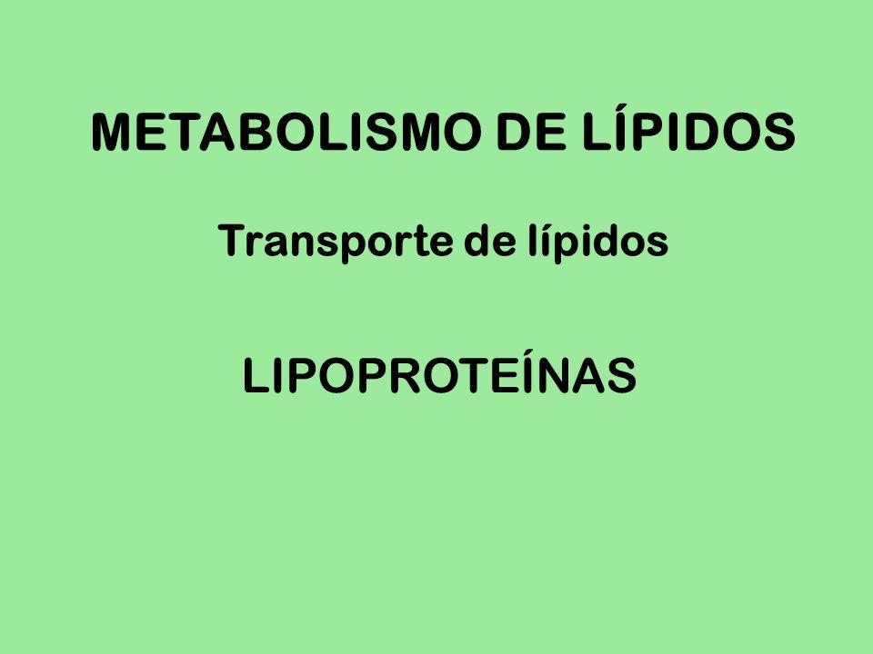 METABOLISMO DE LÍPIDOS Transporte de lípidos LIPOPROTEÍNAS