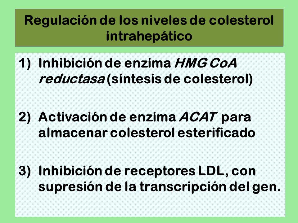 Regulación de los niveles de colesterol intrahepático 1)Inhibición de enzima HMG CoA reductasa (síntesis de colesterol) 2)Activación de enzima ACAT pa
