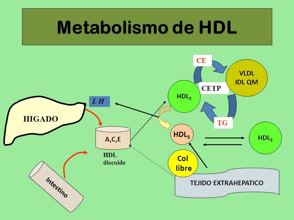 CETP Metabolismo de HDL VLDL IDL QM L H HIGADO A,C,E Intestino HDL discoide HDL 2 TG CE HDL 2 HDL 3 TEJIDO EXTRAHEPATICO Col libre
