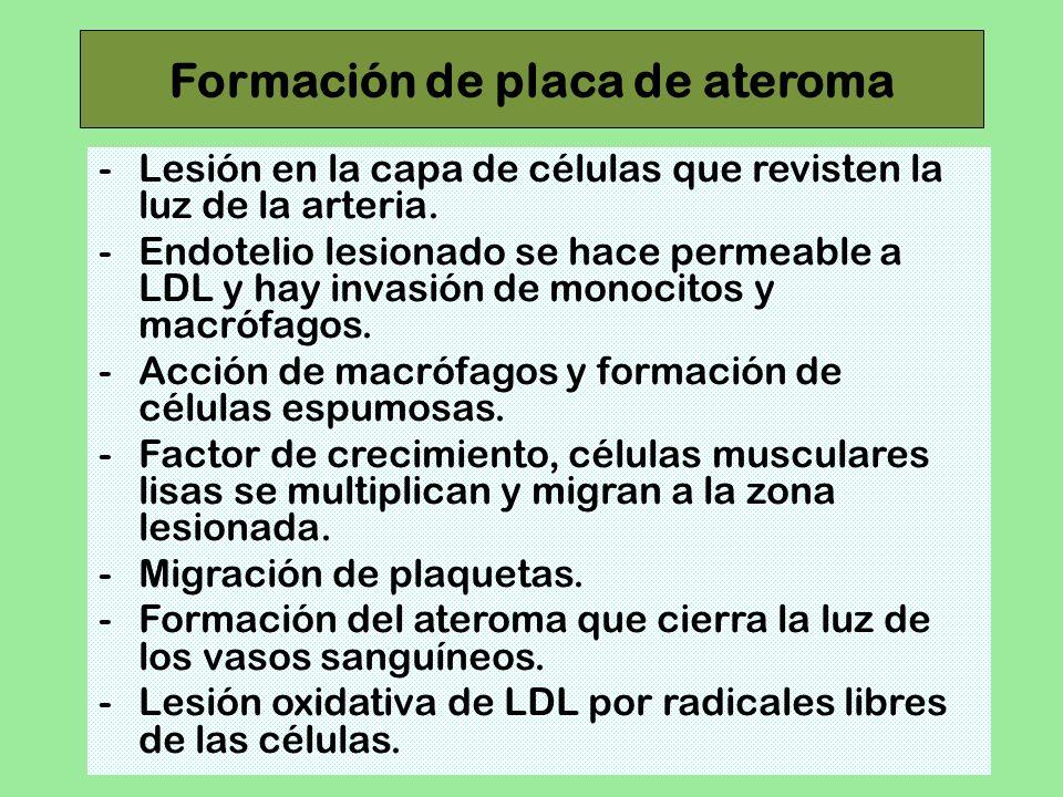 Formación de placa de ateroma -Lesión en la capa de células que revisten la luz de la arteria. -Endotelio lesionado se hace permeable a LDL y hay inva