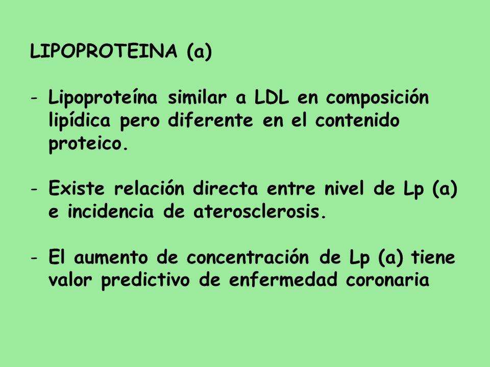LIPOPROTEINA (a) -Lipoproteína similar a LDL en composición lipídica pero diferente en el contenido proteico. -Existe relación directa entre nivel de