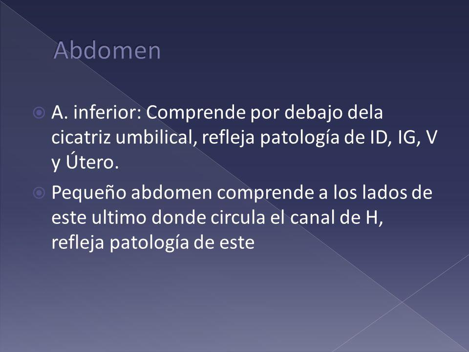 A. inferior: Comprende por debajo dela cicatriz umbilical, refleja patología de ID, IG, V y Útero. Pequeño abdomen comprende a los lados de este ultim