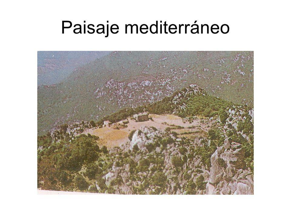 Paisaje mediterráneo