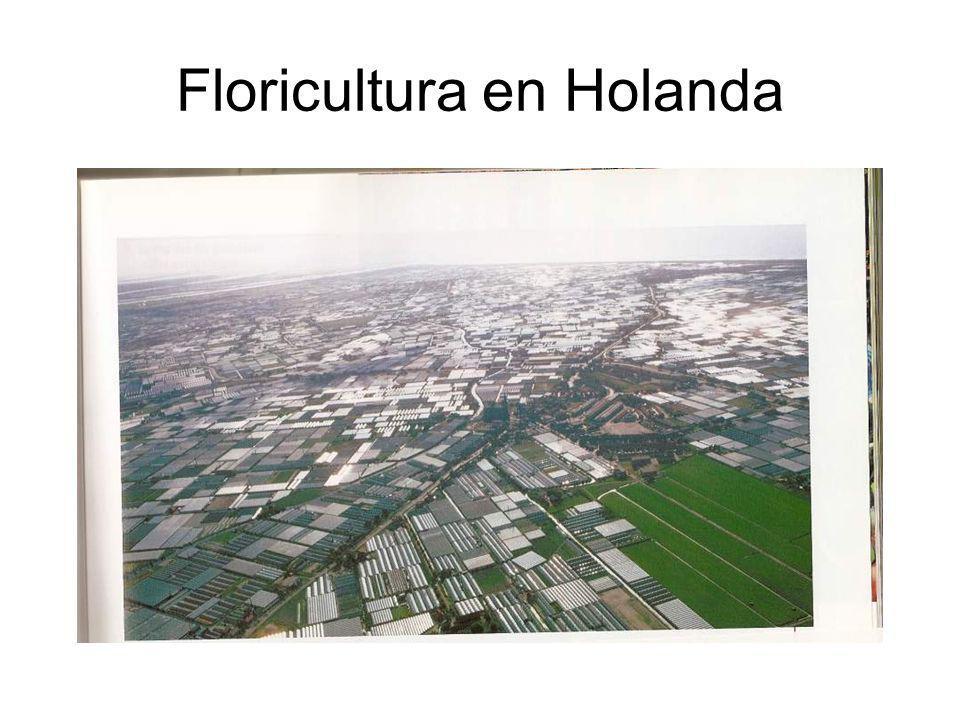 Floricultura en Holanda