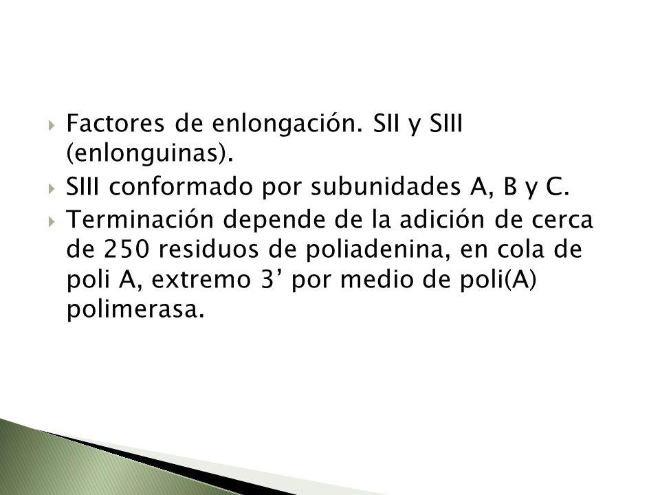 Factores de enlongación. SII y SIII (enlonguinas). SIII conformado por subunidades A, B y C. Terminación depende de la adición de cerca de 250 residuo