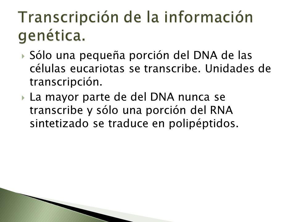 Sólo una pequeña porción del DNA de las células eucariotas se transcribe. Unidades de transcripción. La mayor parte de del DNA nunca se transcribe y s
