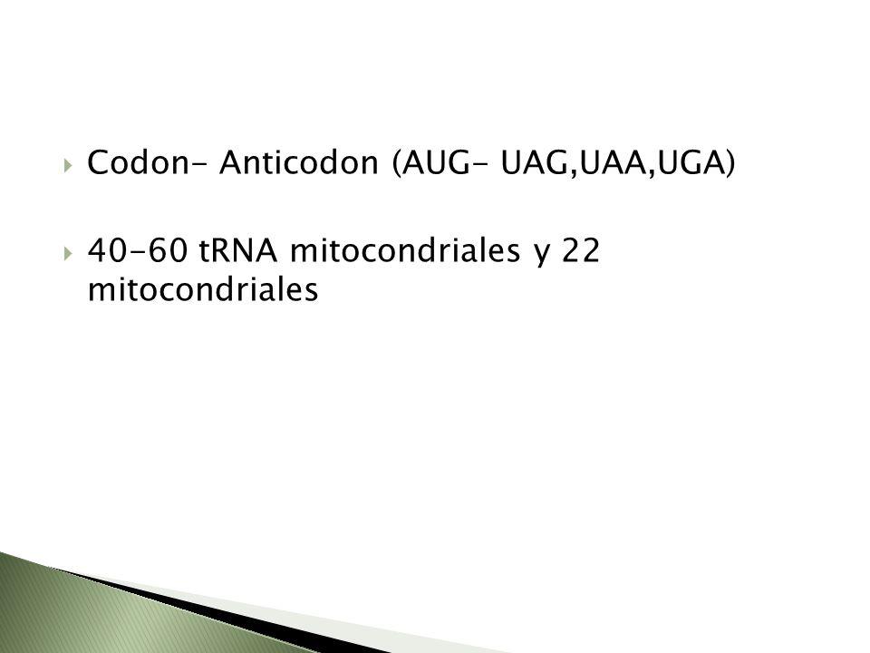 Codon- Anticodon (AUG- UAG,UAA,UGA) 40-60 tRNA mitocondriales y 22 mitocondriales