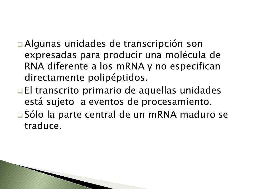Algunas unidades de transcripción son expresadas para producir una molécula de RNA diferente a los mRNA y no especifican directamente polipéptidos. El