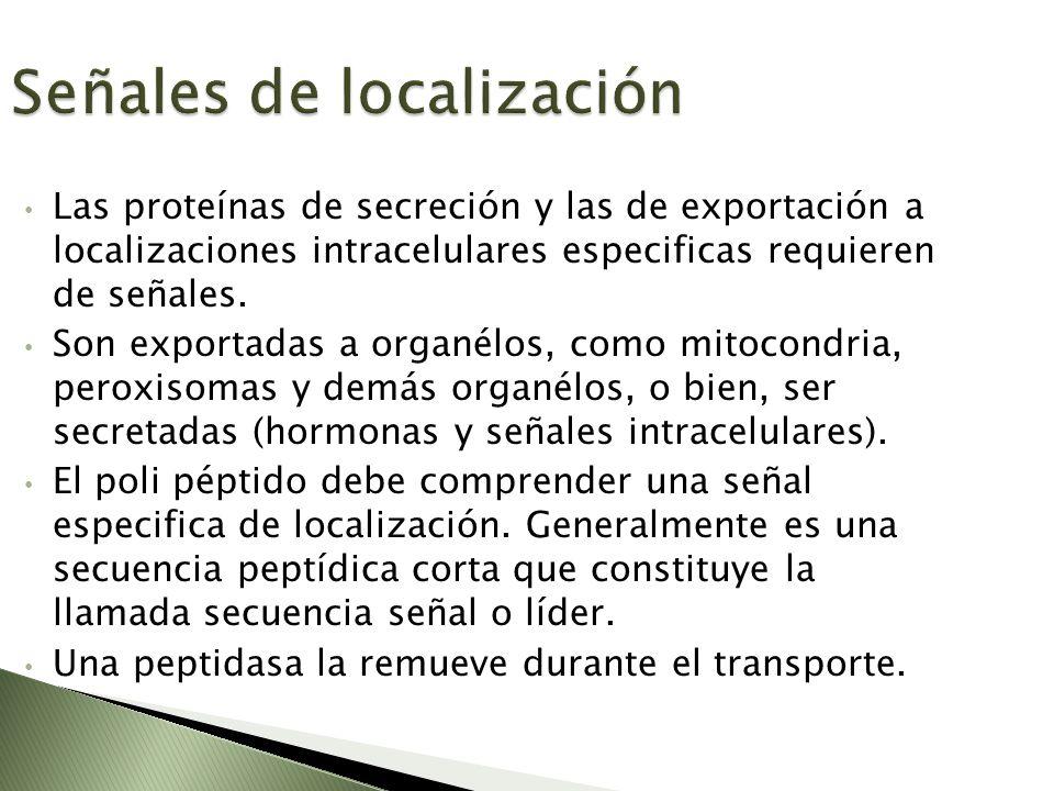 Señales de localización Las proteínas de secreción y las de exportación a localizaciones intracelulares especificas requieren de señales. Son exportad