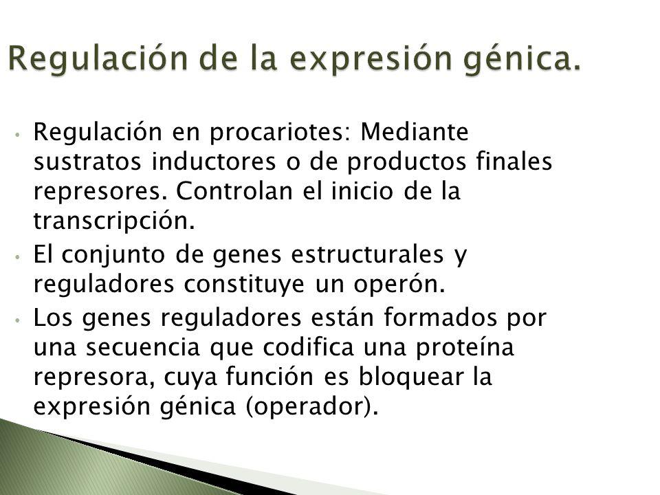 Regulación de la expresión génica. Regulación en procariotes: Mediante sustratos inductores o de productos finales represores. Controlan el inicio de
