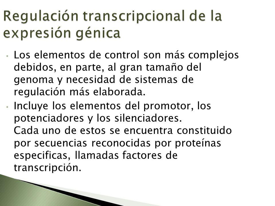 Regulación transcripcional de la expresión génica Los elementos de control son más complejos debidos, en parte, al gran tamaño del genoma y necesidad