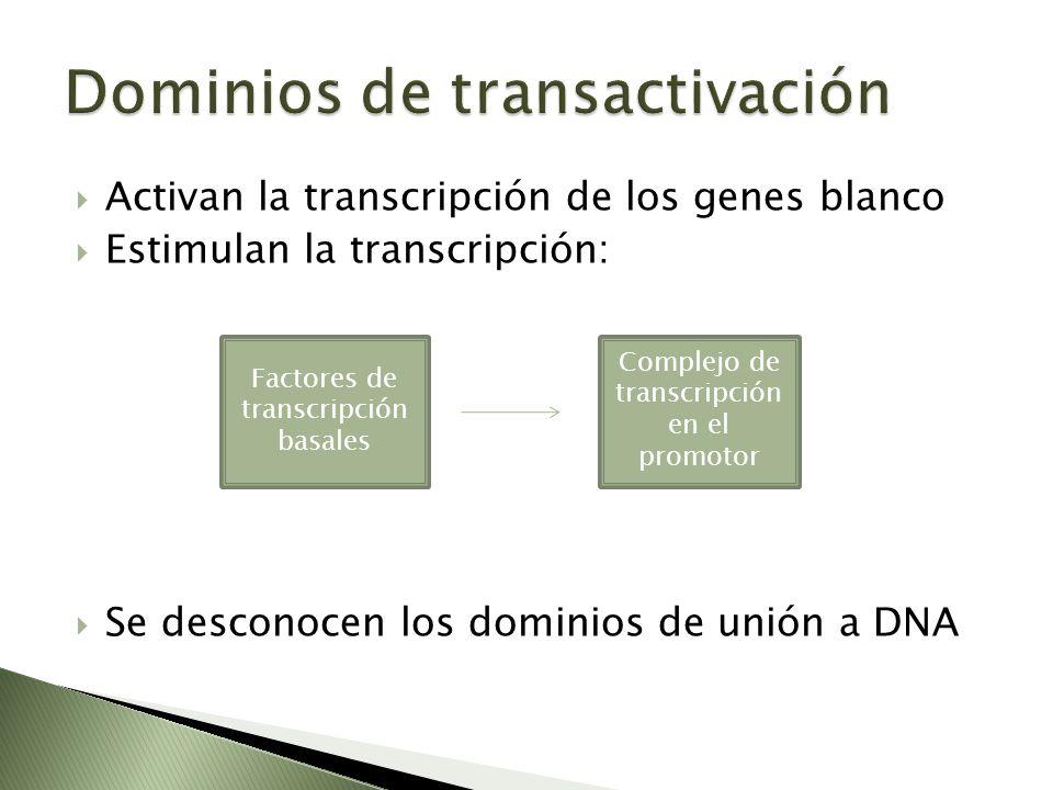 Activan la transcripción de los genes blanco Estimulan la transcripción: Se desconocen los dominios de unión a DNA Factores de transcripción basales C