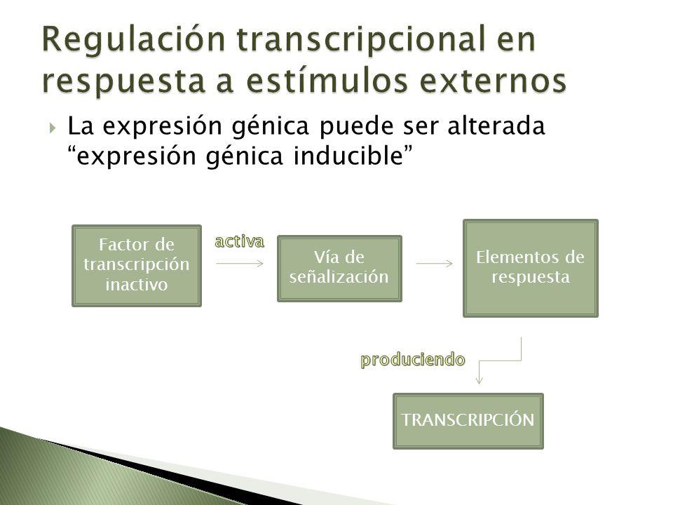 La expresión génica puede ser alterada expresión génica inducible Factor de transcripción inactivo Vía de señalización Elementos de respuesta TRANSCRI