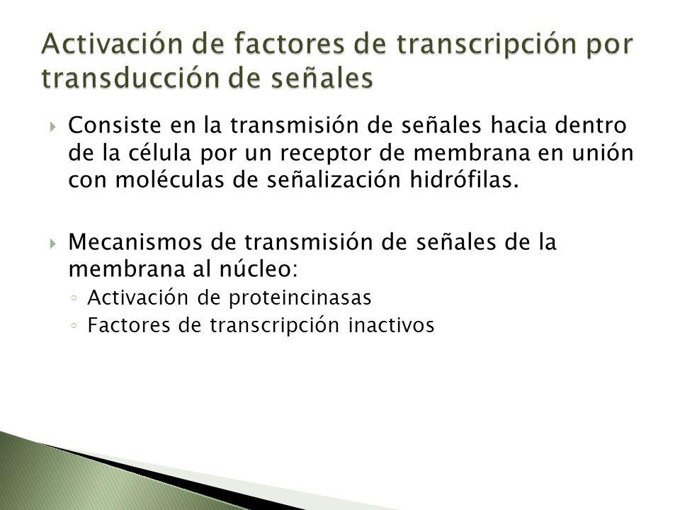 Consiste en la transmisión de señales hacia dentro de la célula por un receptor de membrana en unión con moléculas de señalización hidrófilas. Mecanis