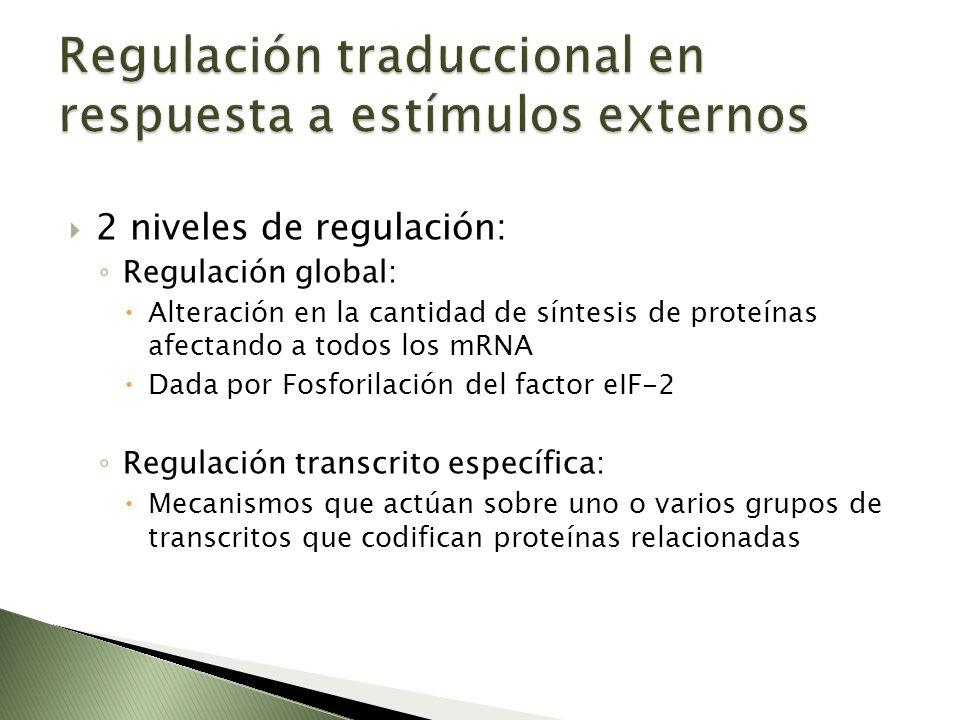 2 niveles de regulación: Regulación global: Alteración en la cantidad de síntesis de proteínas afectando a todos los mRNA Dada por Fosforilación del f