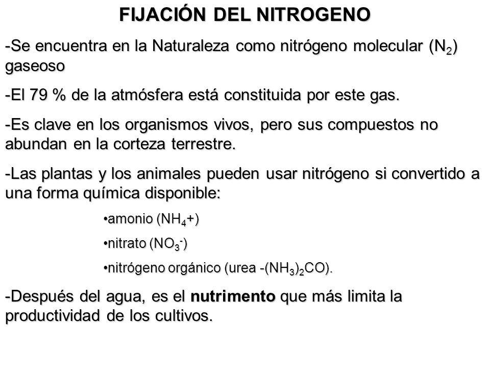 FIJACIÓN DEL NITROGENO -Se encuentra en la Naturaleza como nitrógeno molecular (N 2 ) gaseoso -El 79 % de la atmósfera está constituida por este gas.