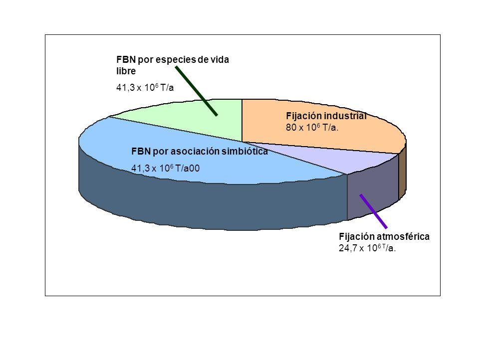 FBN por especies de vida libre 41,3 x 10 6 T/a FBN por asociación simbiótica 41,3 x 10 6 T/a00 Fijación industrial 80 x 10 6 T/a. Fijación atmosférica