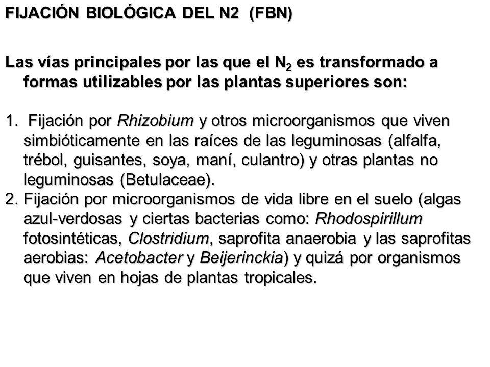 FIJACIÓN BIOLÓGICA DEL N2 (FBN) Las vías principales por las que el N 2 es transformado a formas utilizables por las plantas superiores son: 1. Fijaci