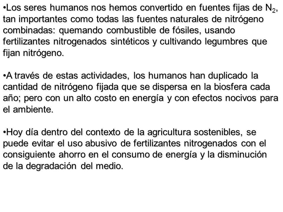 Los seres humanos nos hemos convertido en fuentes fijas de N 2, tan importantes como todas las fuentes naturales de nitrógeno combinadas: quemando com
