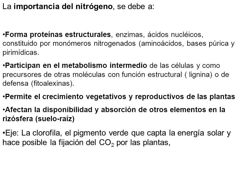 La importancia del nitrógeno, se debe a: Forma proteínas estructurales, enzimas, ácidos nucléicos, constituido por monómeros nitrogenados (aminoácidos