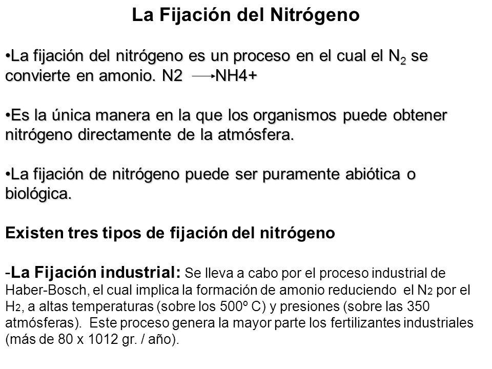 La Fijación del Nitrógeno La fijación del nitrógeno es un proceso en el cual el N 2 se convierte en amonio. N2 NH4+La fijación del nitrógeno es un pro