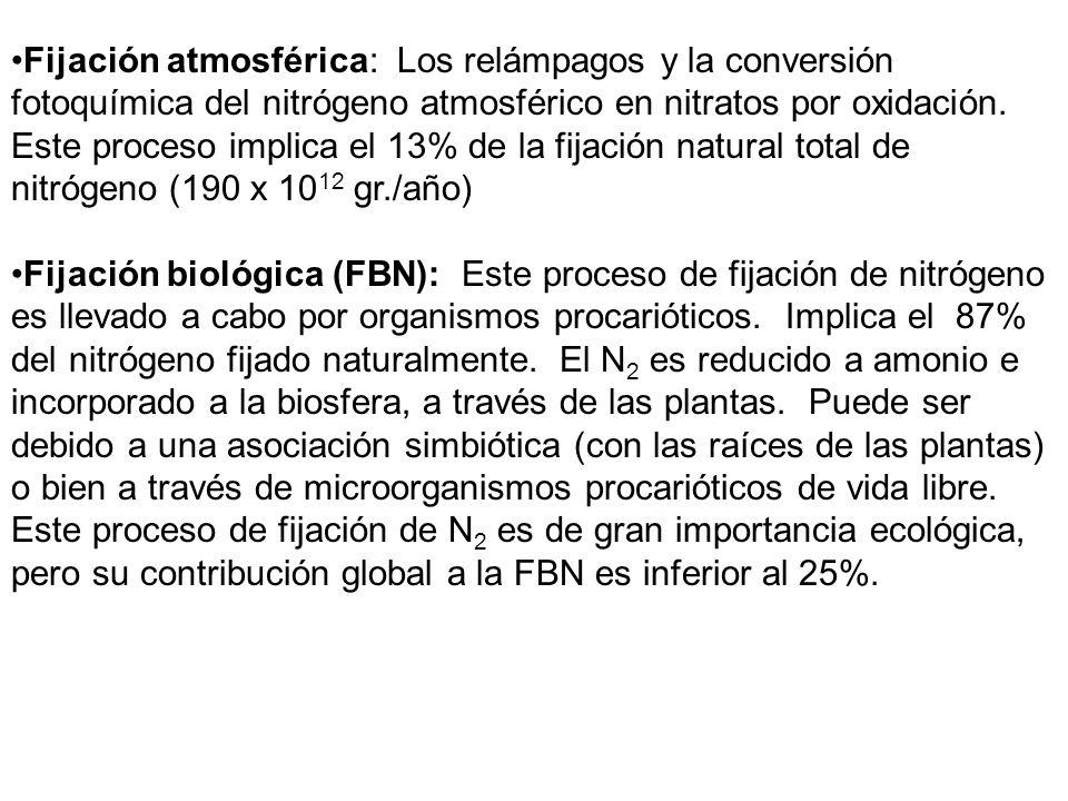 Fijación atmosférica: Los relámpagos y la conversión fotoquímica del nitrógeno atmosférico en nitratos por oxidación. Este proceso implica el 13% de l