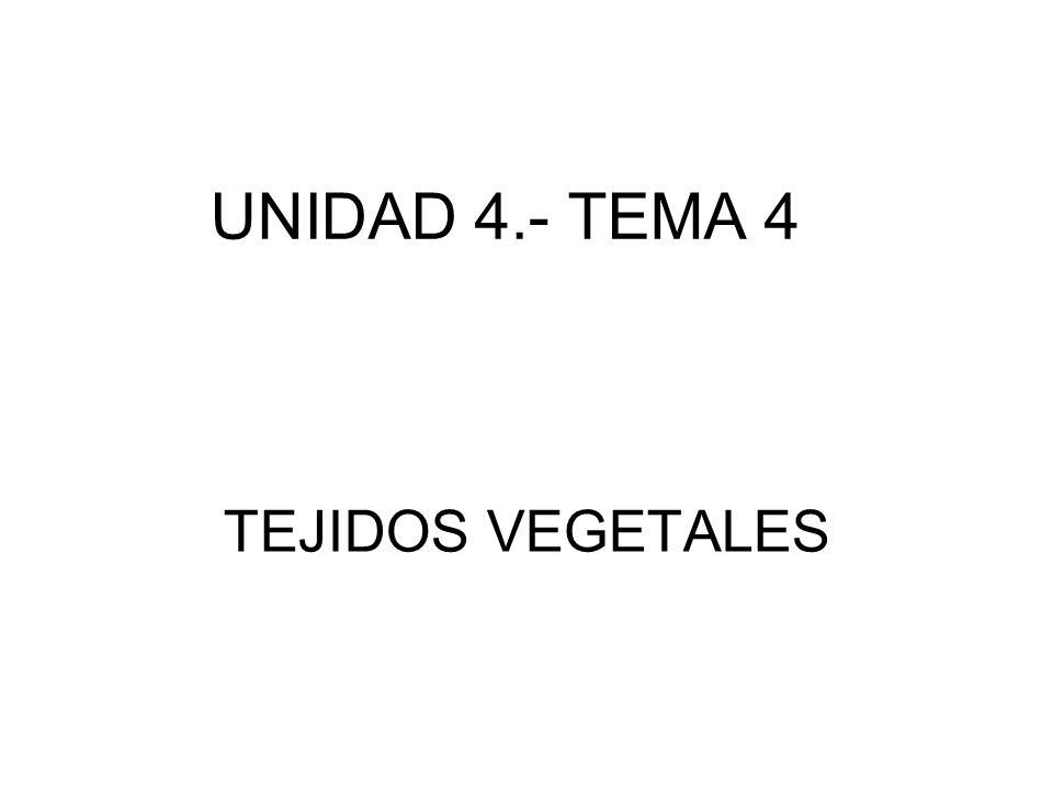 TEJIDOS VEGETALES UNIDAD 4.- TEMA 4