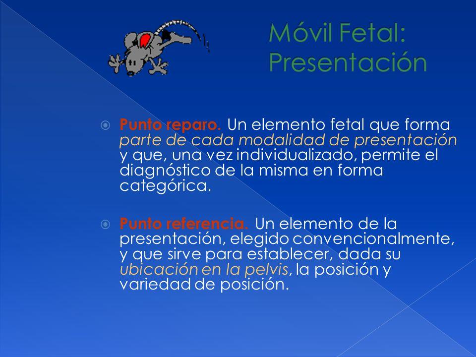 Punto reparo. Un elemento fetal que forma parte de cada modalidad de presentación y que, una vez individualizado, permite el diagnóstico de la misma e