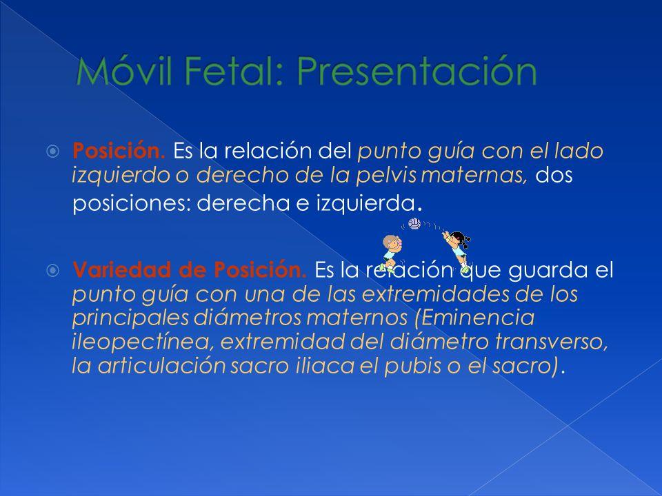 Posición. Es la relación del punto guía con el lado izquierdo o derecho de la pelvis maternas, dos posiciones: derecha e izquierda. Variedad de Posici