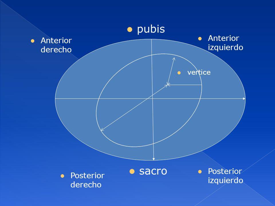 pubis sacro Anterior izquierdo Anterior derecho Posterior izquierdo Posterior derecho vertice