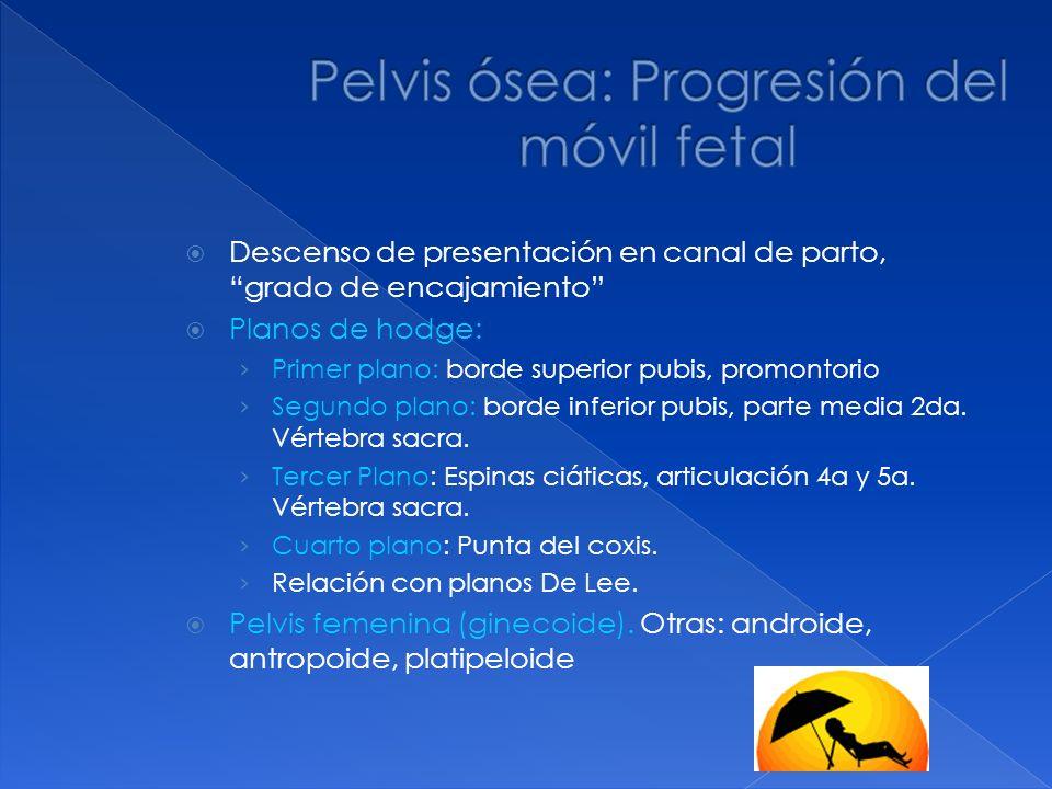 Descenso de presentación en canal de parto, grado de encajamiento Planos de hodge: Primer plano: borde superior pubis, promontorio Segundo plano: bord