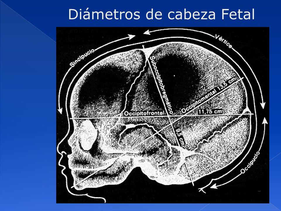 DiámetroscmPerímetros cm Biparietal (Bi-P) Une las dos emninencias parietales 9.5Bitemporal (Bi-T) Une la mayor distancia entre las ramas de la sutura coronaria 8 Biacromial (Bi-A) Transverso mayor de los hombros 12Biacromial35 Bitrocantéreo (Bi-T) Transverso mayor de las caderas 9.5Bitrocantéreo21 Diámetros transversales de la cabeza Otros diámetros y perímetros fetales