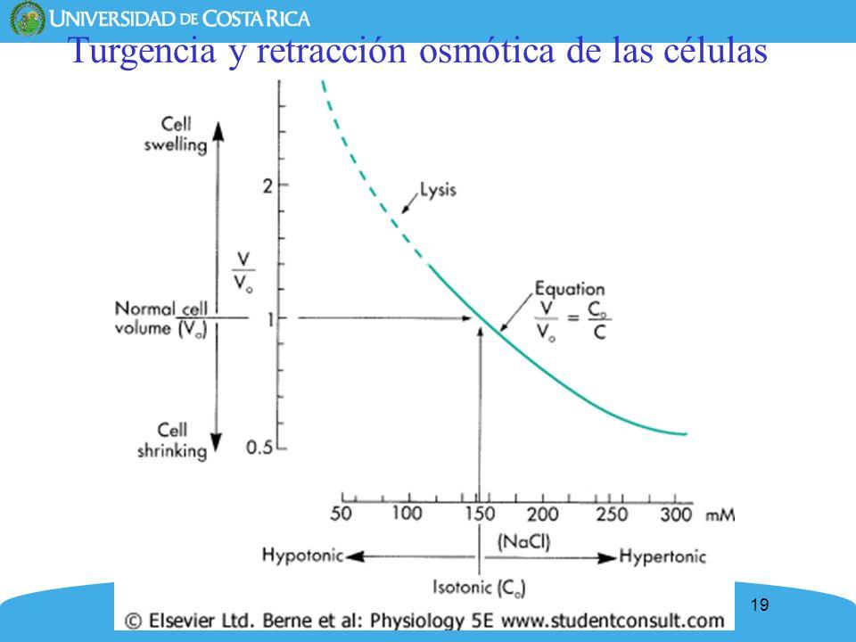 19 Turgencia y retracción osmótica de las células
