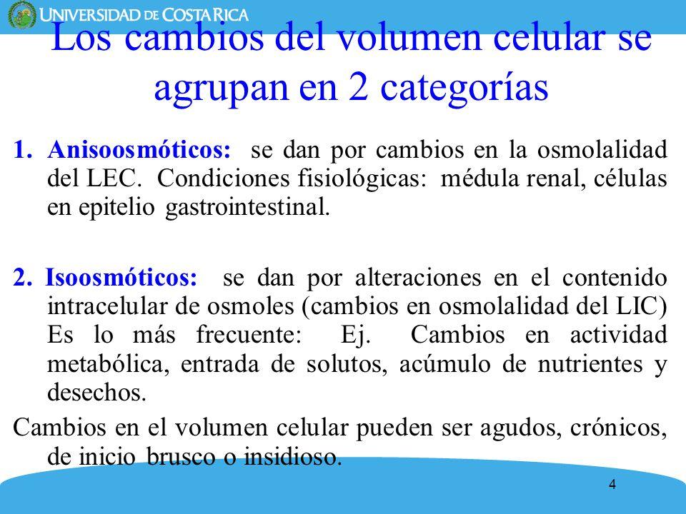 25 Incremento regulador del volumen celular (IRV) Ganancia de solutos: KCl, NaCl Se activan intercambiadores: Na + /H +, Cl - /HCO3 - Cotransportador Na + /K + /2Cl - Cierre de canales iónicos: K +, Cl - Acumulación de osmolitos orgánicos: síntesis y entrada (cotransporte activo secundario: 3Na+:1Cl - : taurina, 3Na + :2Cl - :betaina, 2Na + : mioinositol y Na + -aminoácidos) Cambios Metabólicos celulares: aumenta proteolisis y glucogenolisis Medio isotónico Medio Hipertónico IRV