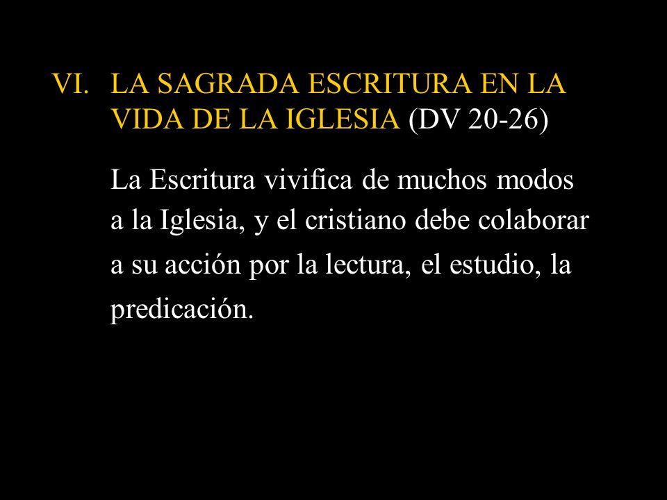 VI.LA SAGRADA ESCRITURA EN LA VIDA DE LA IGLESIA (DV 20-26) La Escritura vivifica de muchos modos a la Iglesia, y el cristiano debe colaborar a su acc