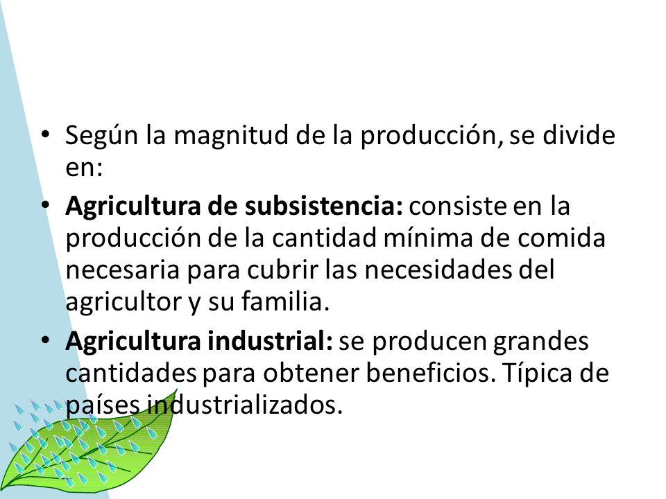 Según la magnitud de la producción, se divide en: Agricultura de subsistencia: consiste en la producción de la cantidad mínima de comida necesaria par