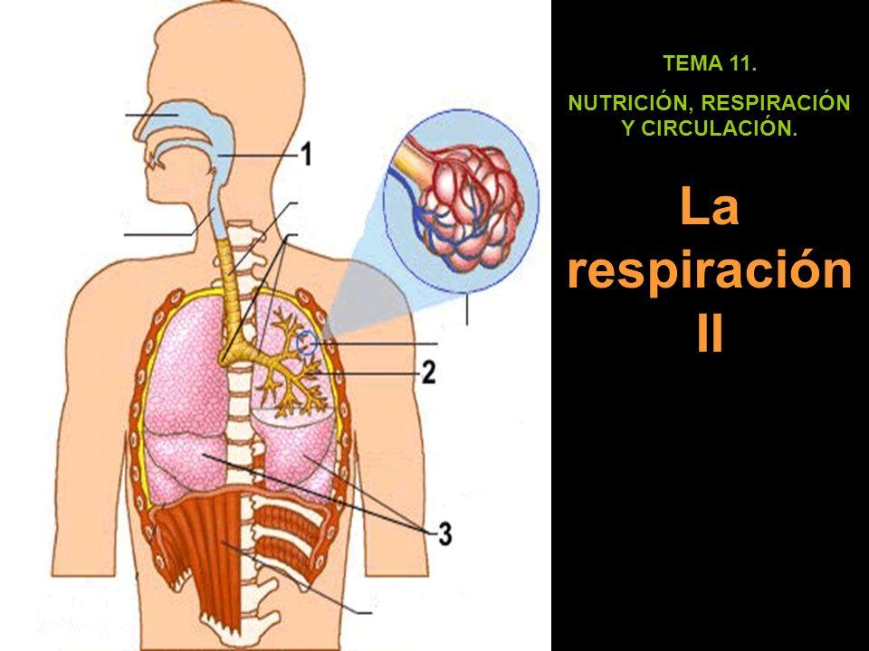 TEMA 11. NUTRICIÓN, RESPIRACIÓN Y CIRCULACIÓN. La respiración II