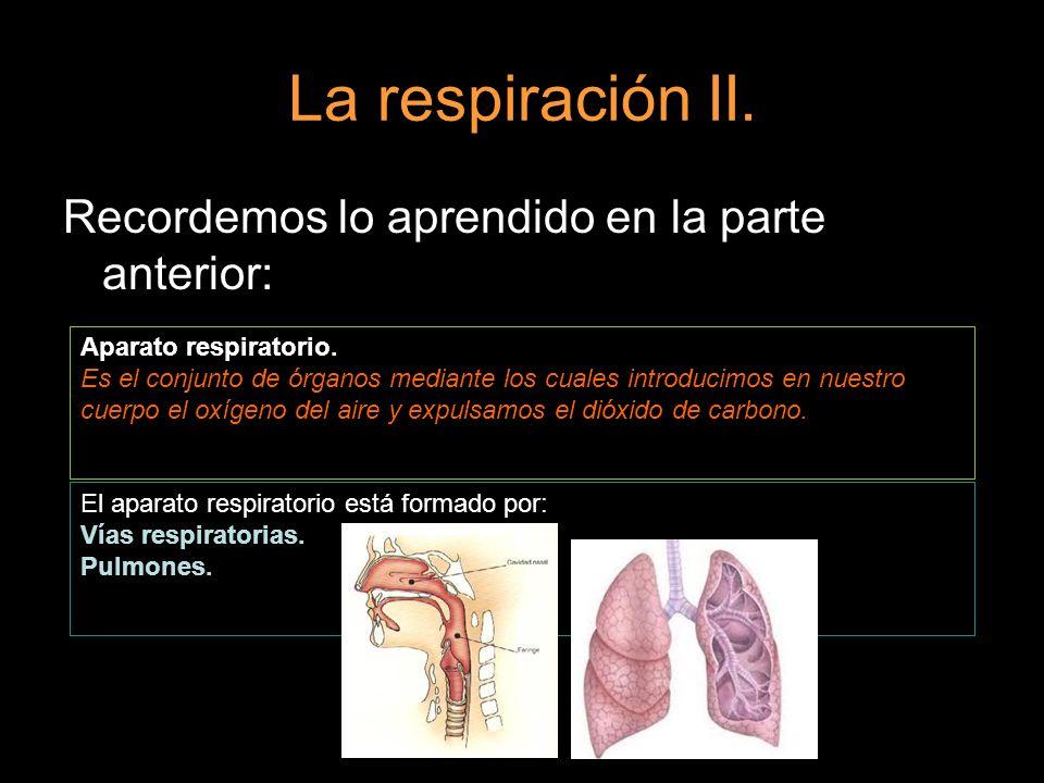 La respiración II. Recordemos lo aprendido en la parte anterior: Aparato respiratorio. Es el conjunto de órganos mediante los cuales introducimos en n