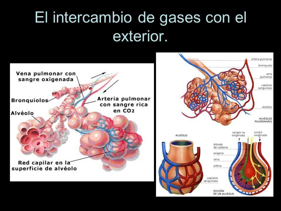 El intercambio de gases con el exterior.
