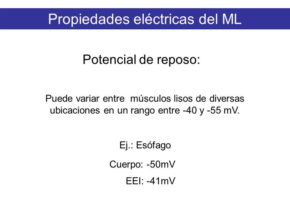 Propiedades eléctricas del ML Potencial de reposo: Puede variar entre músculos lisos de diversas ubicaciones en un rango entre -40 y -55 mV. Ej.: Esóf