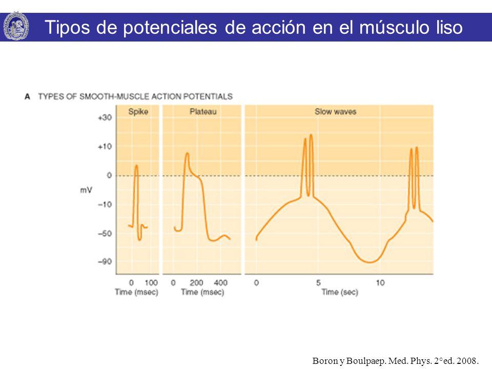Boron y Boulpaep. Med. Phys. 2°ed. 2008. Tipos de potenciales de acción en el músculo liso