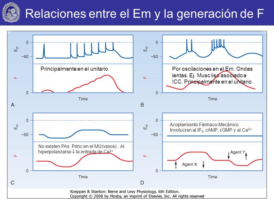 Relaciones entre el Em y la generación de F Principalmente en el unitario No existen PAs. Princ en el MU(vasos). Al hiperpolarizarse la entrada de Ca