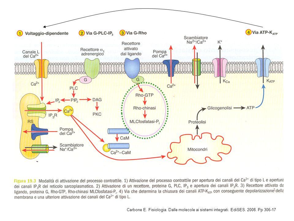 Carbone E. Fisiologia. Dalle molecole ai sistemi integrati. EdiSES. 2008. Pp 306-17