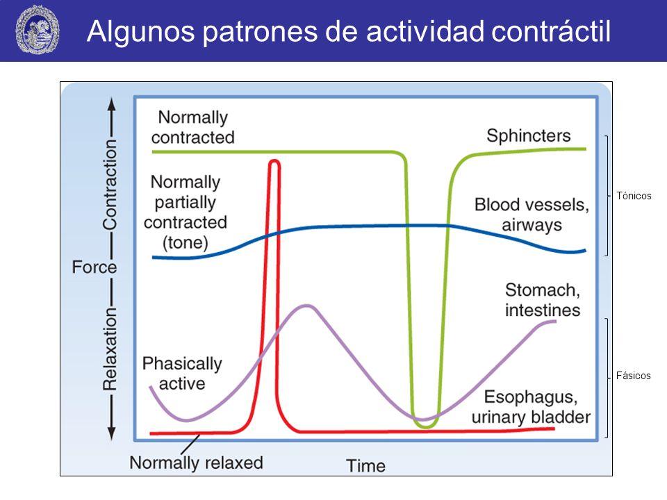 Algunos patrones de actividad contráctil Tónicos Fásicos